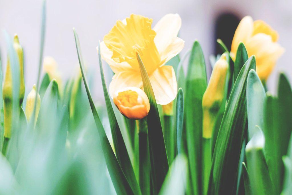 Redeeming Easter